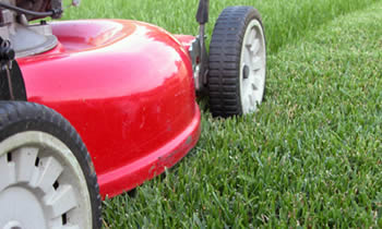 Lawn Care in Charleston SC Lawn Care Services in Charleston SC Quality Lawn Care in Charleston SC
