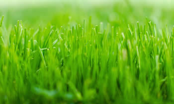 Lawn Service in Charleston SC Lawn Care in Charleston SC Lawn Mowing in Charleston SC Lawn Professionals in Charleston SC