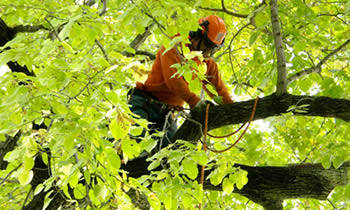 Tree Trimming in Charleston SC Tree Trimming Services in Charleston SC Tree Trimming Professionals in Charleston SC Tree Services in Charleston SC Tree Trimming Estimates in Charleston SC Tree Trimming Quotes in Charleston SC