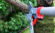 Tree Pruning Services in Charleston SC